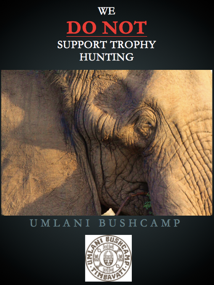 umlani takes stand against trophy hunting green heart tourism